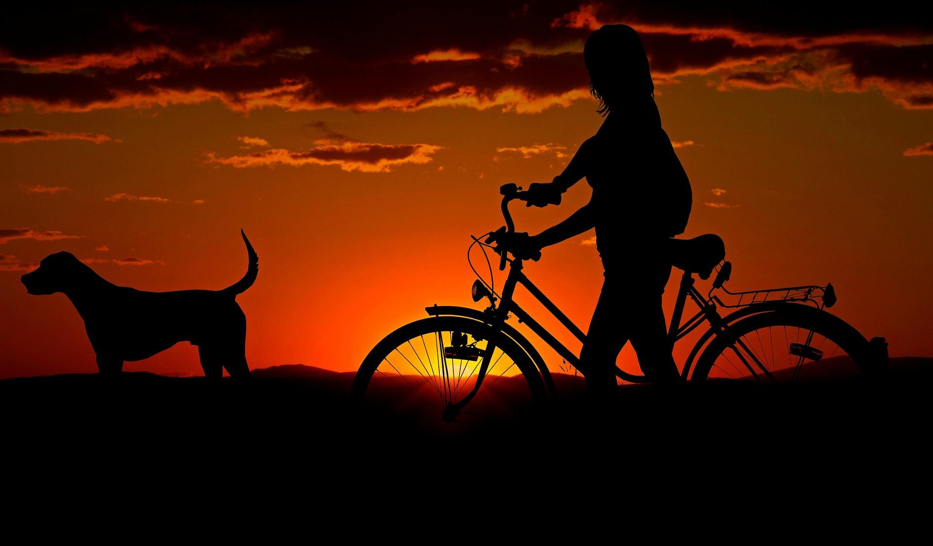 Frau auf Fahrrad mit Hund vor Sonnenuntergang
